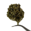 Premium Hemp Flower - doublecherry delta8